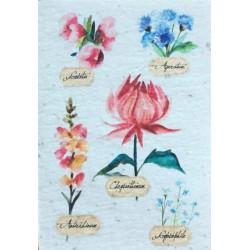 Carte A Planter Botanique